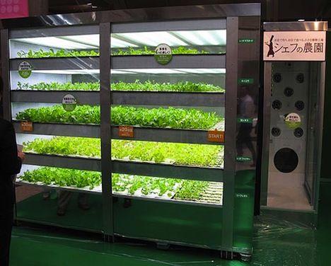 lettuce-vending-machine